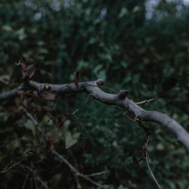 Fotografía de preboda en otoño